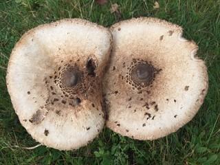 alien fungi