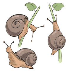 Set of three snails, isolated on white