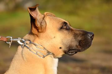Dog portrait, closeup photo