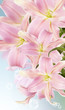 canvas print picture - Lily.Flower card