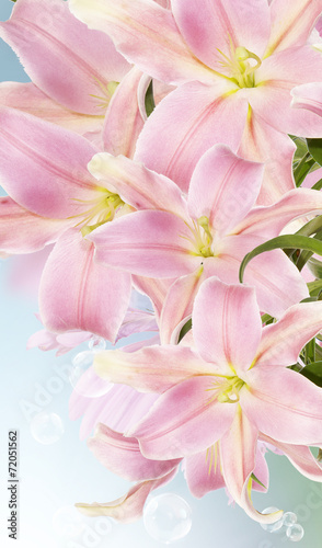 canvas print picture Lily.Flower card