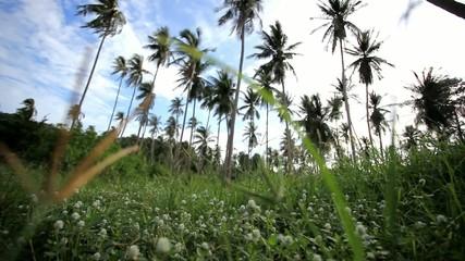 palm trees garden against blue sky background on Koh Samui.