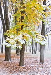 Chestnut Tree under snow