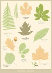 Botanique planche 1