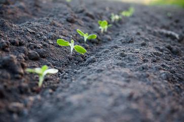 green plants growth