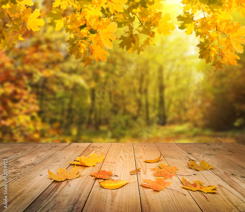 Poster Bossen autumn forest background