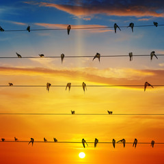 flock of birds on a background of sunrise