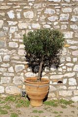 plant in vintage terracotta flowerpot