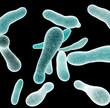 Leinwanddruck Bild - Legionella bacteria