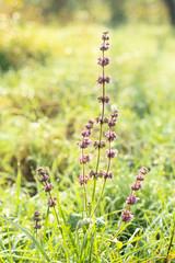 Flower on fields