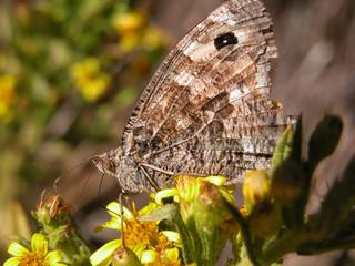 farfallina d'autunno 1