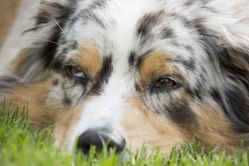 Schläfrig Müde