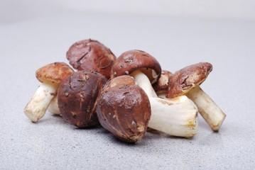Fresh bolete  mushrooms background