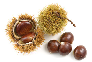 organic chestnuts on white