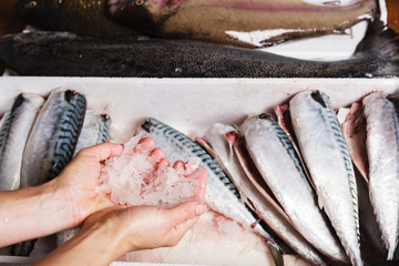 Hand arranging fish in a box