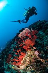 Diver, sponge in Gili Lombok Nusa Tenggara Barat underwater