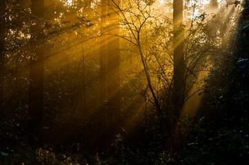 früh im Wald