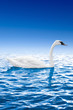 Swan swimming in the water against the blue sky