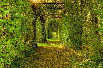 Grüner Tunnel aus Hecken