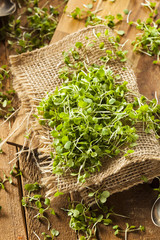 Raw Green Arugula Microgreens