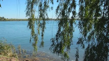 Foliage along River