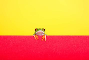 Gelb-orange mit Frosch