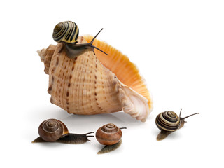 Four snails and sea cockleshell