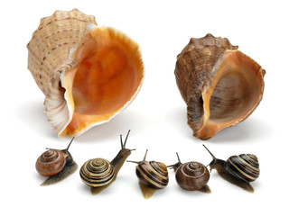 Five snails and two sea cockleshells