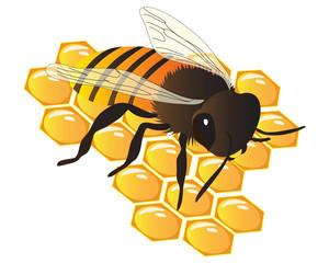bee on beehive