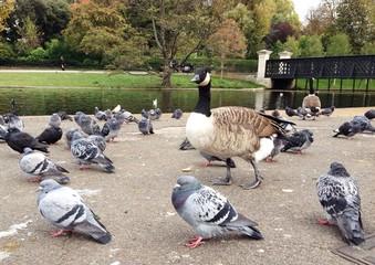 Vögel im Stadtpark