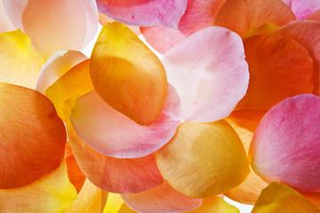 petalos de colores aislados fondo