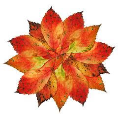 Herbst-Blätter-Blüte