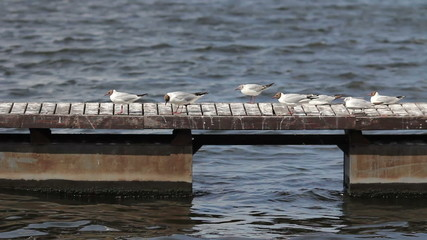 seagulls sitting on the dock