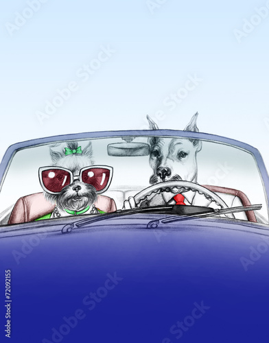 Dogs in car .fashion animals .watercolor illustration - 72092155