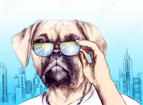 Dog in glasses .fashion animal . illustration - 72092192