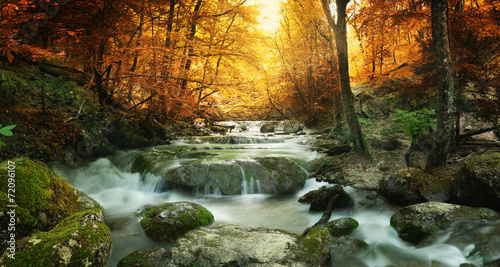 forest waterfall - 72096107