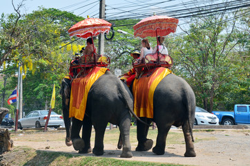 Foreigner traveller riding Thai Elephants tour Ayutthaya