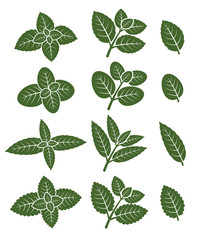 Mint leaves set. Vector