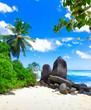 Landscape Cove Exotic