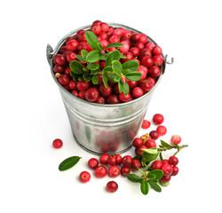 ripe cranberries in a metal bucket