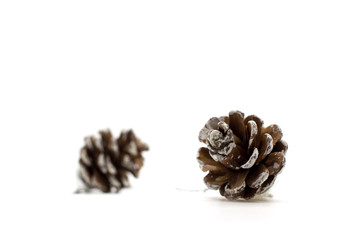 Brown pine cone.