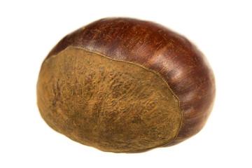 Fresh chestnut isolated on white background