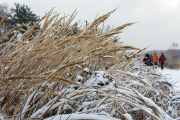 Первый снег и гололед.