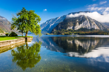 Single tree on a background of mountains in Hallstatt