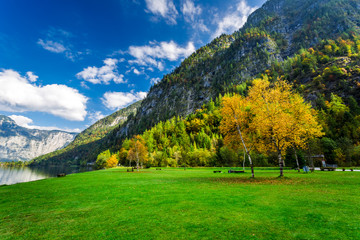 Autumn colors in the mountain forest