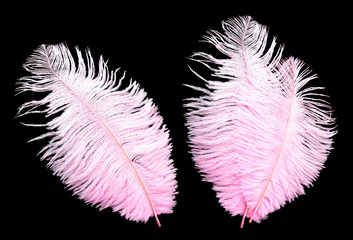 Big pink feathers on black background.