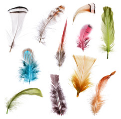 Collection of different color feathers.