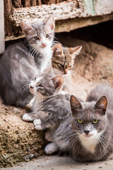Small kittens with mom in Tuscany