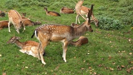 Hirsche und Rehe im Park
