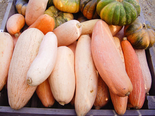 Harvest Gourds